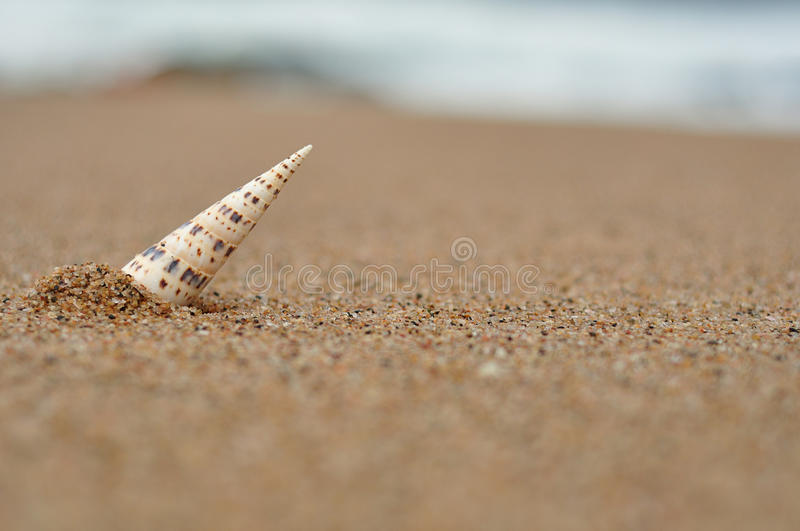 A sea shell stick into the sand. With the ocean in the background that is out of focus stock photos