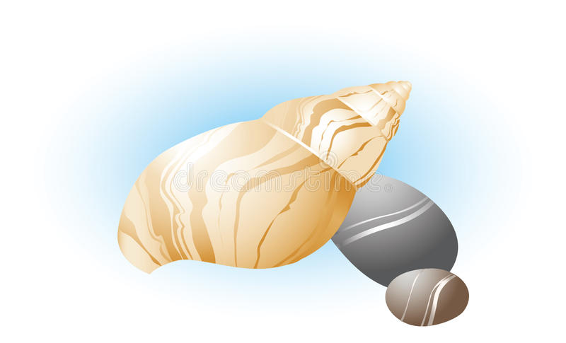 Download Sea shell with the stones stock vector. Illustration of wildlife - 20812079