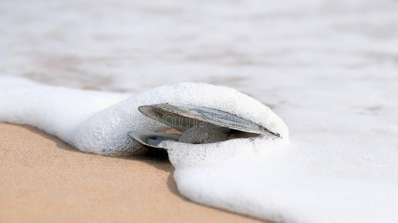Sea shell washed by surf stock image
