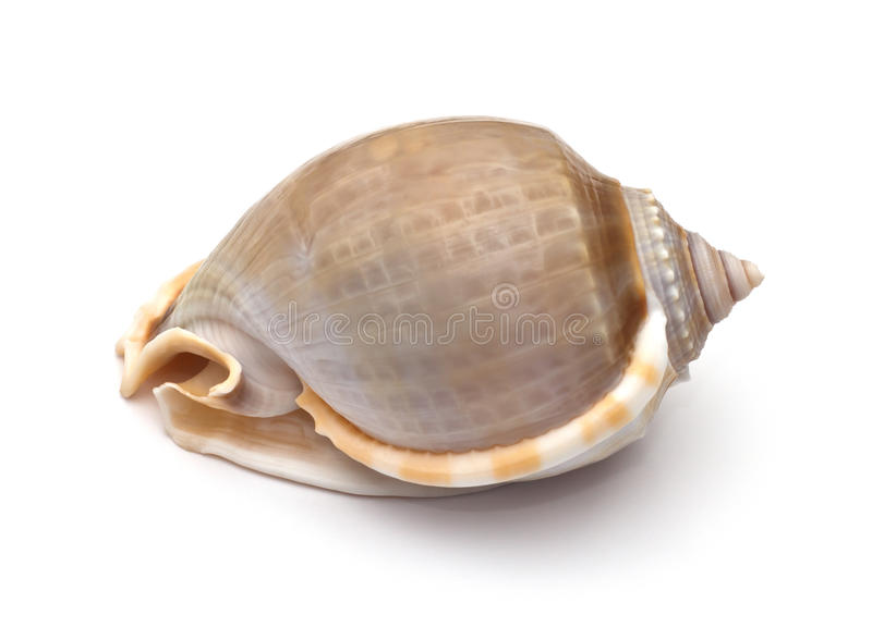 Download Sea shell stock photo. Image of closeup, amazing, form - 39509694