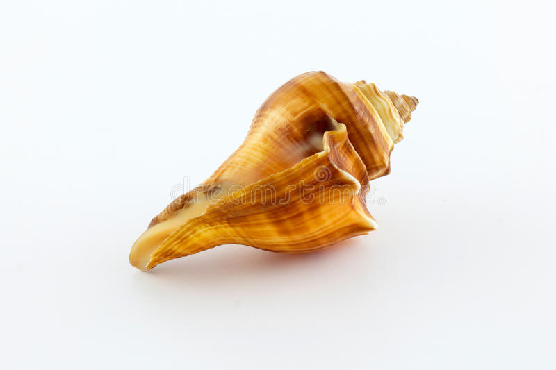 Sea shell on a white background royalty free stock photos