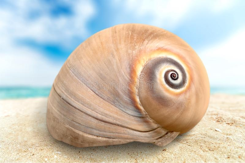 Sea shell. White background mollusk isolated snail star royalty free stock image