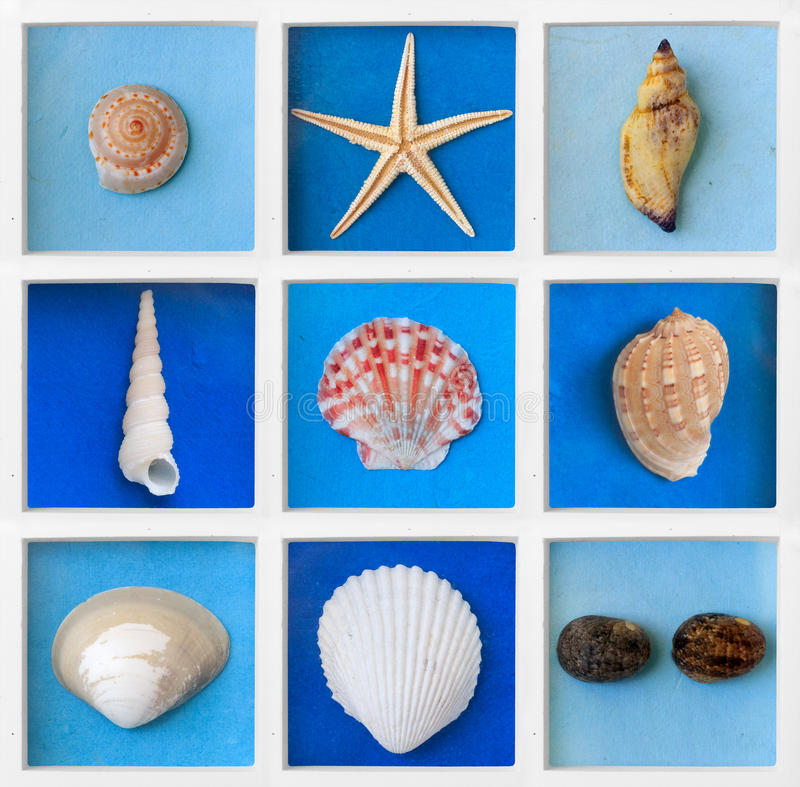 Sea shell. In white square block frame stock photography