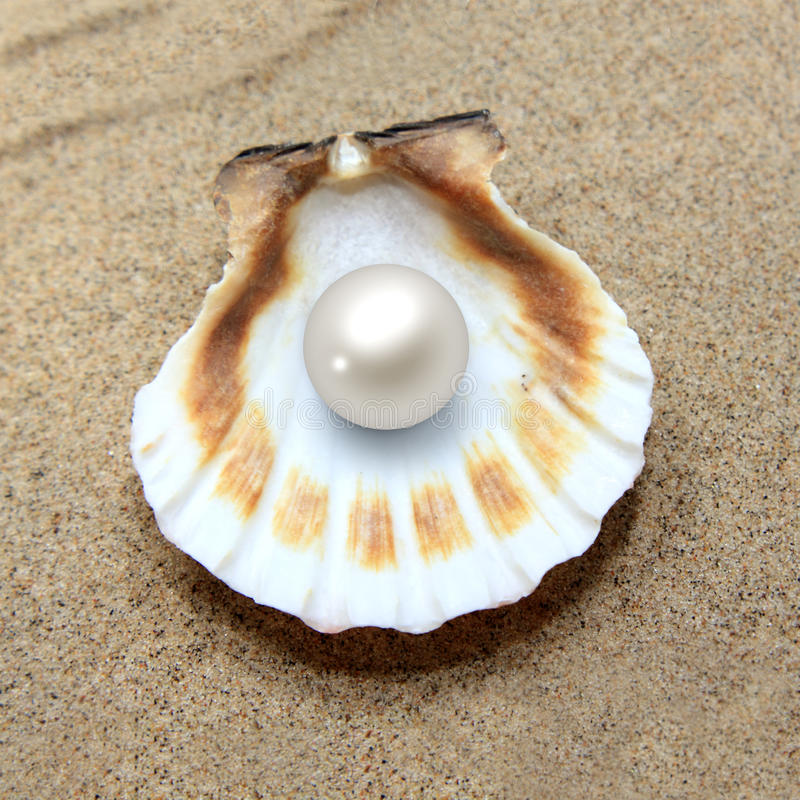 Free Sea Shell With Pearl Stock Image - 57098271