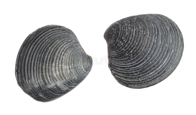 Sea Shellfish Fossils Stock Image