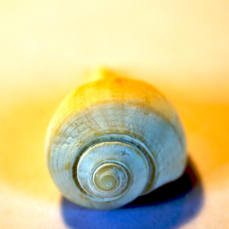 Free Sea Shells Royalty Free Stock Image - 13687406
