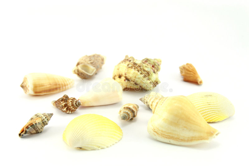 Download Sea Shells Royalty Free Stock Photos - Image: 1409738
