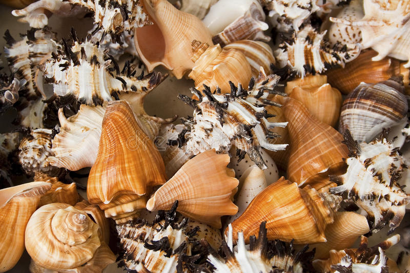 Download Pile of sea shells stock image. Image of spiral, colour - 15387041