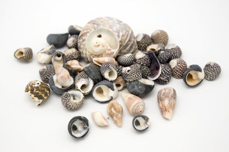 Download Sea Shells stock image. Image of black, stack, assortment - 21562187