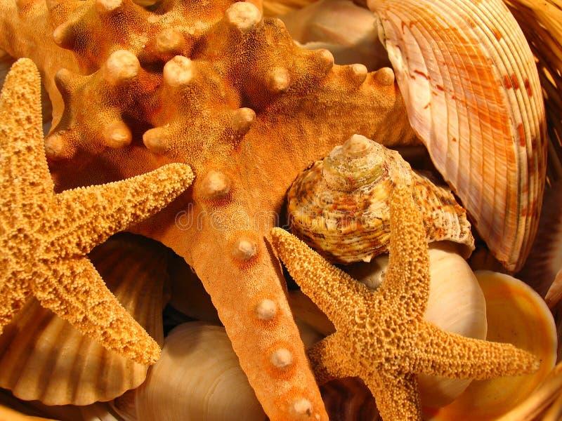 Sea shells. Close-up of sea shells royalty free stock images