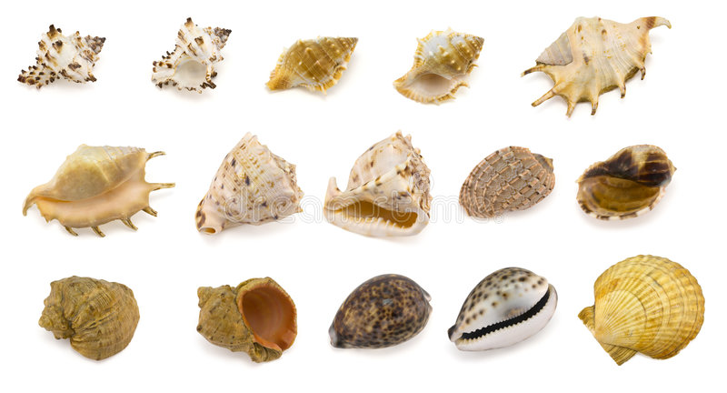 Download Sea shells stock photo. Image of vacation, spiral, strong - 5538792