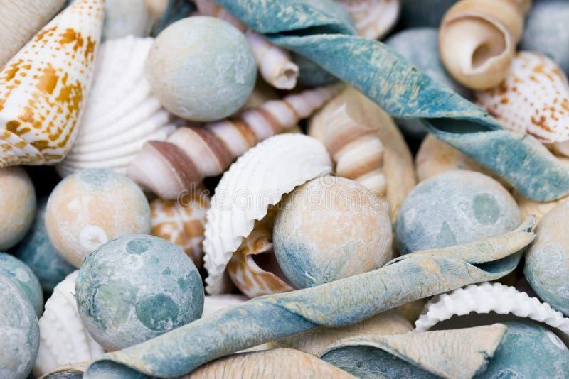 Sea shells. Group of blue sea sheels mixed together