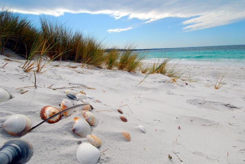 sea shells στοκ εικόνες