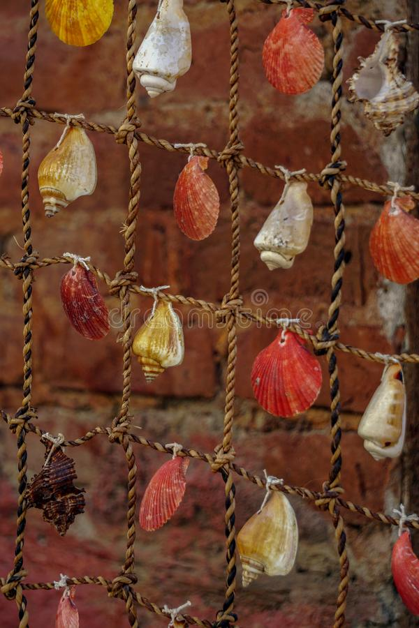 Sea shells attached on the fishing net texture template background close up view royalty free stock photos