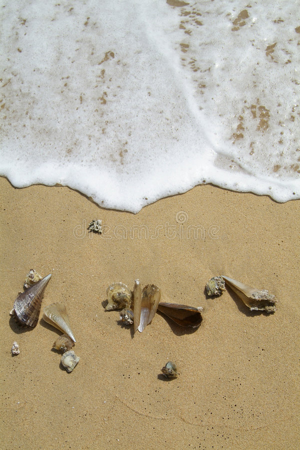 Sea-shells auf dem Strand lizenzfreie stockfotos