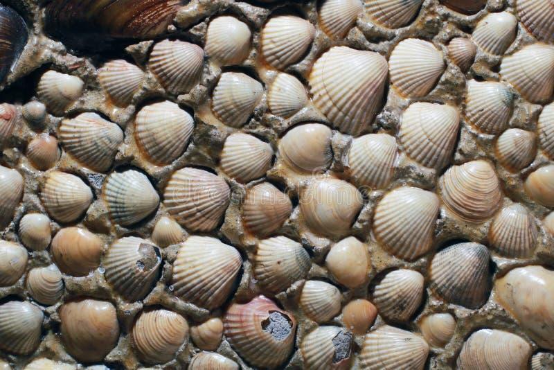 Sea shells background. royalty free stock image