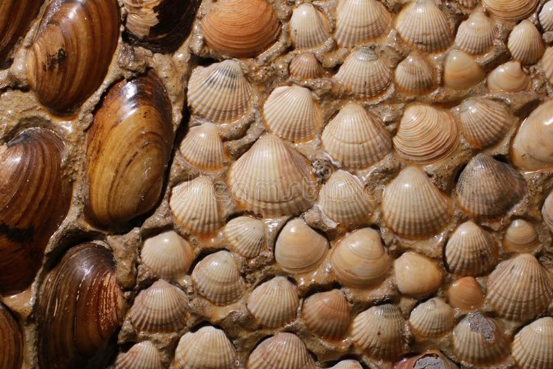 Sea shells background. stock photography