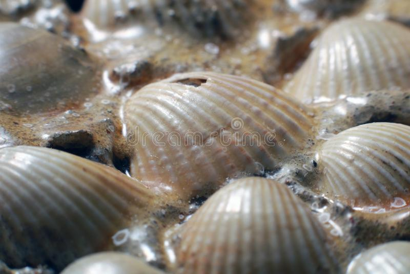 Sea shells background. stock photos