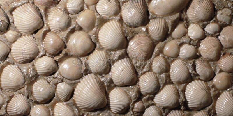 Sea shells background. stock image