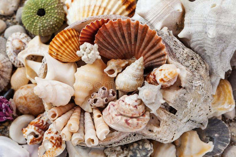 Sea shells background, assorted colorful shells deco royalty free stock photos