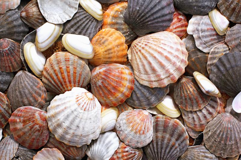 Sea shells background. Vacation texture