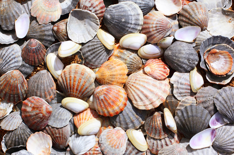Sea shells background royalty free stock photography