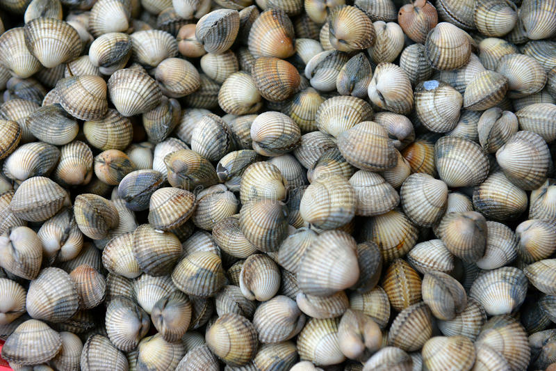 Download Sea Shells Stock Photo - Image: 33551350