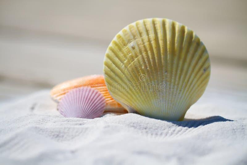 Sea Shells On Beach Free Public Domain Cc0 Image