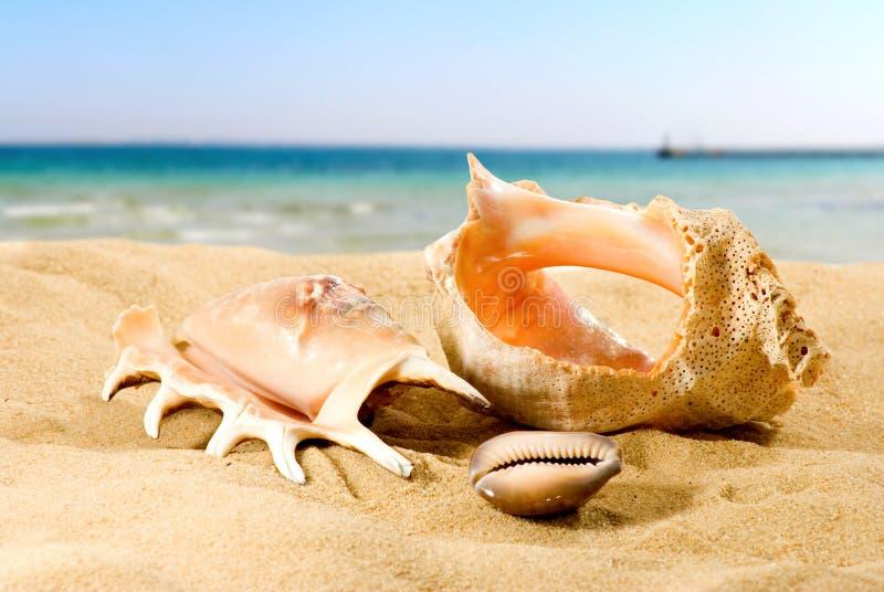 Sea shells on the beach against the sky close-up. Sea shells on the beach against the sky stock photography