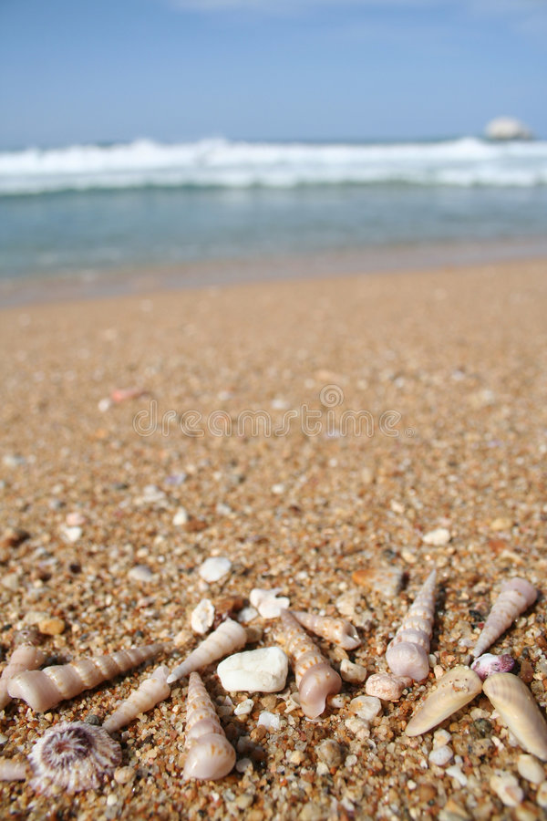 Sea shells at the beach with copy space stock photography