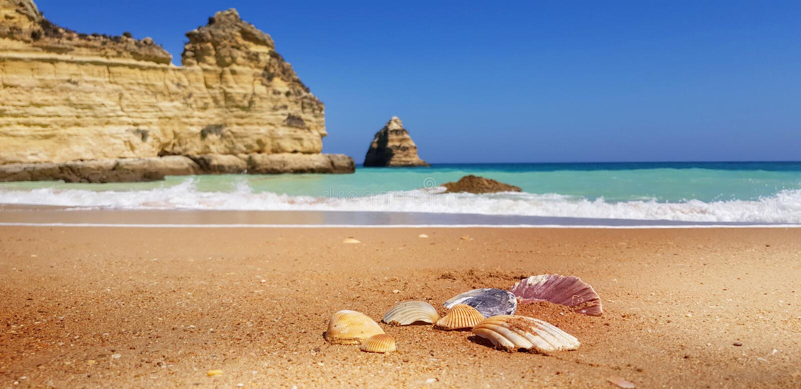 Sea shells on the beach in Lagos, Portugal royalty free stock image