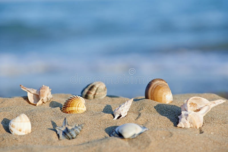 Download Sea shells on beach stock photo. Image of lagoon, biology - 33445028