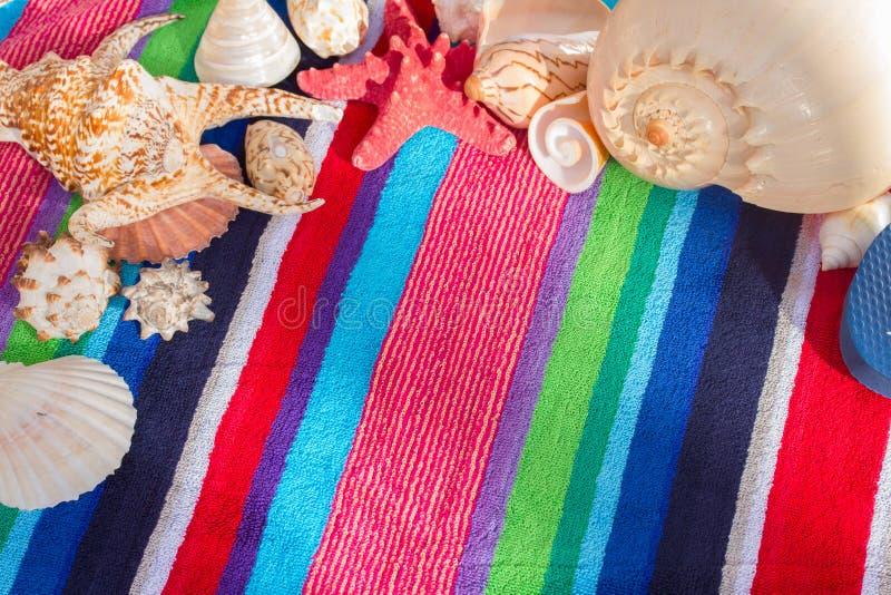 Sea shells on beach towel royalty free stock image