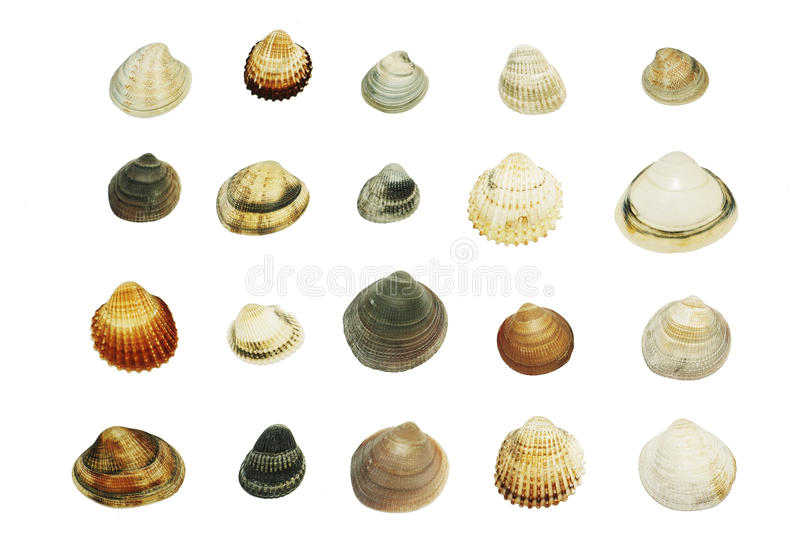Sea shells, big set. Different sea shells isolated on the white background royalty free stock photography