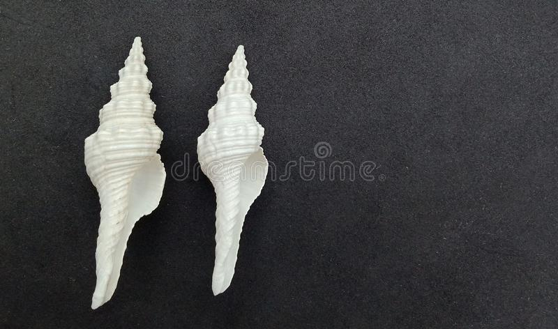 Sea shells with black textured background wallpaper, stock photo