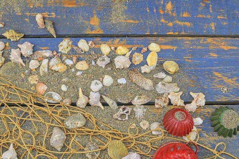 Sea shells on a blue background. Summer traveling time. Sea holiday background with various shells. Place for your text. Lay desig stock images