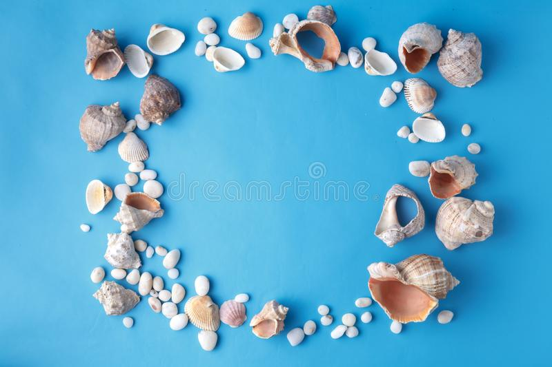 Sea shells on blue, vacaton concept on plain background royalty free stock photo