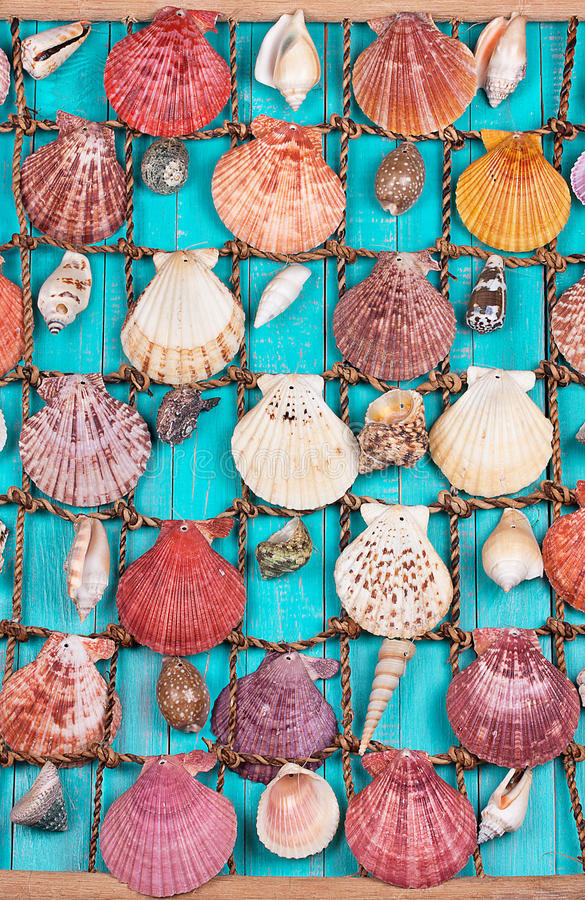 Sea Shells On Blue Wooden Background royalty free stock image