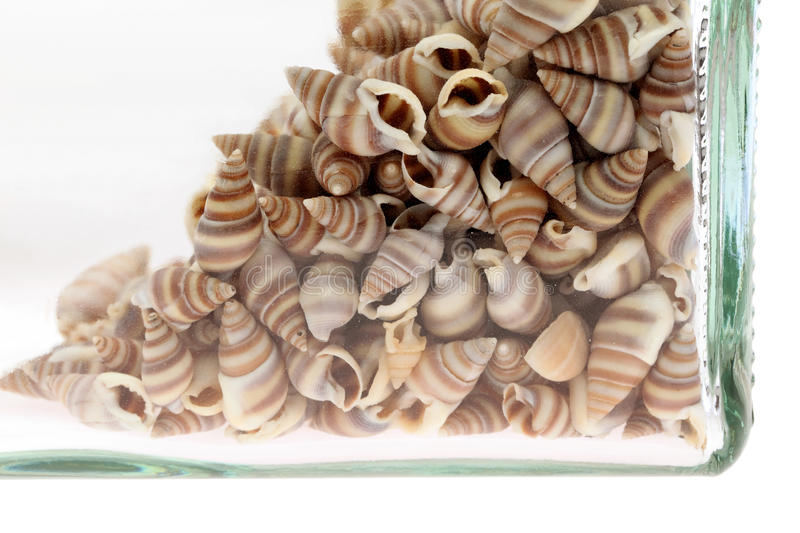 Download Sea shells in a bottle stock image. Image of creature - 18013231