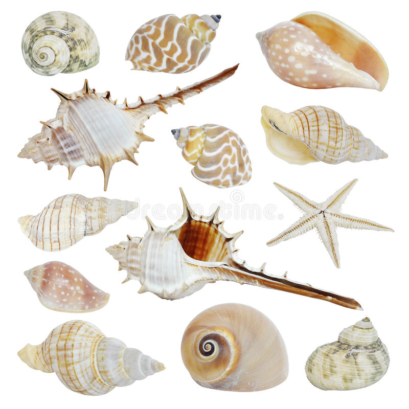 Sea shells collection stock images
