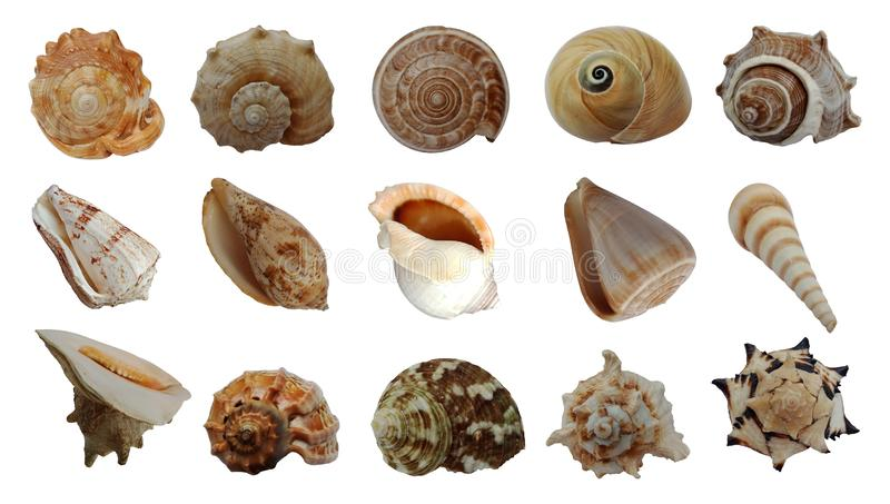 Sea shells collection isolated on white background. stock photo
