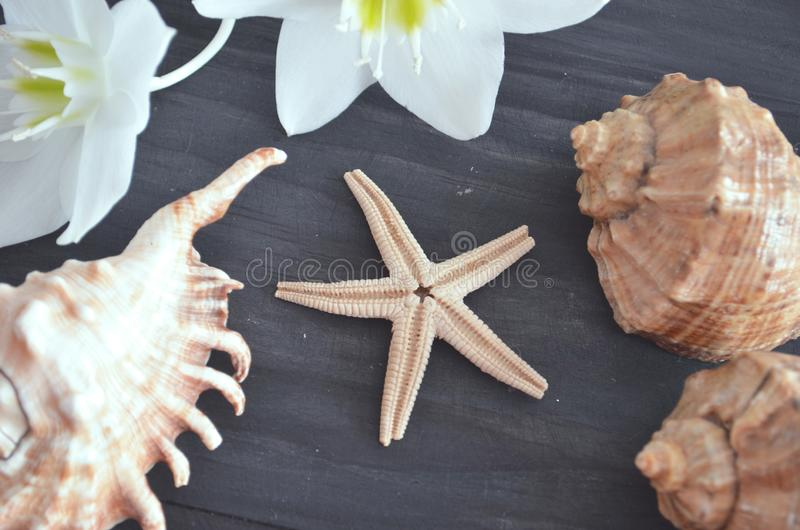 Sea shells on a dark background stock photography