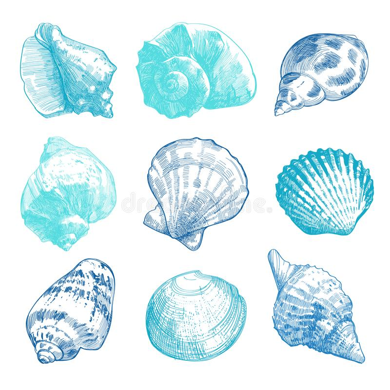 Sea shells doodle set. Sea shells sketch set. Color tender doodle seashell silhouettes isolated on white background. Vector ocean life hand drawn illustration stock illustration