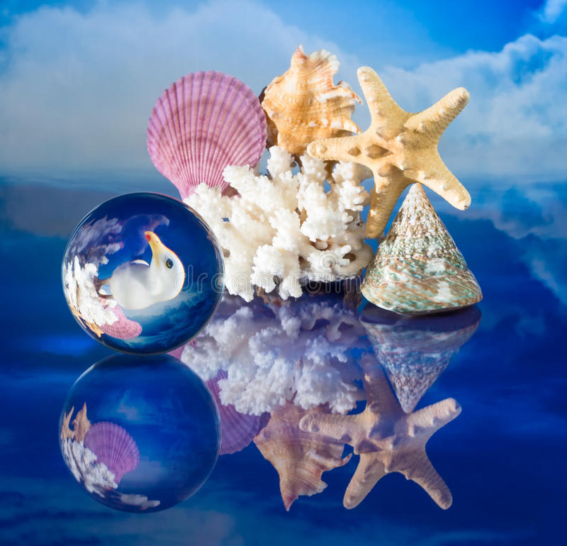 Download Sea shells and globe stock image. Image of closeup, bird - 90600741