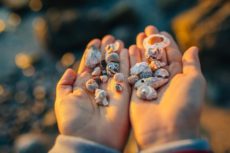 Sea shells in the hand. royalty free stock photos