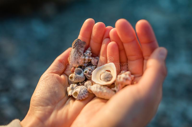Sea shells in the hand. stock photos