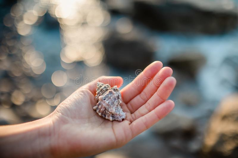 Sea shells in the hand. Beautiful sea shell in the hand vector illustration