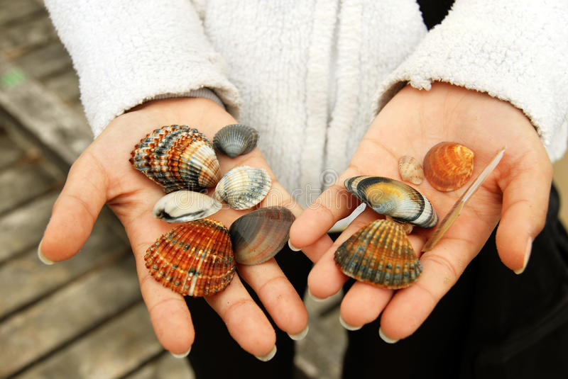 Sea Shells in hands stock image