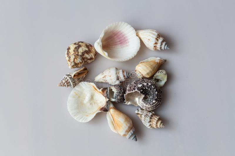 Sea shells isolated on gray background stock photography