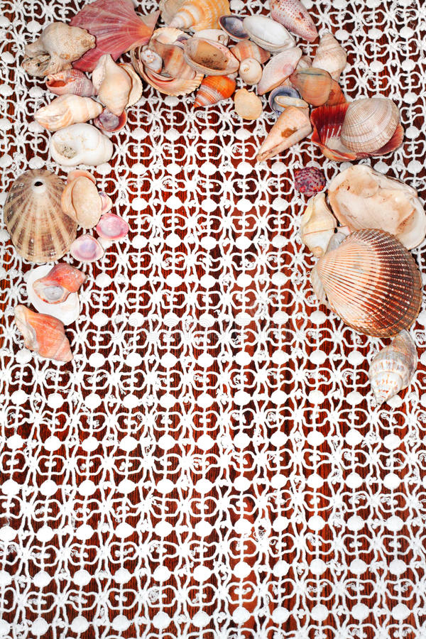 Sea Shells on Lace royalty free stock photo
